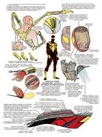 spider-man-parker_149.jpg