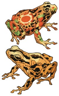 grenouilles-d-airain-les_0.jpg